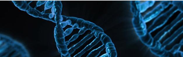 Syndrome Wiskott-Aldrich : succès de la thérapie génique, Faculté de médecine