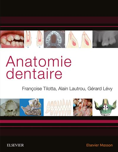 Publication | Anatomie dentaire