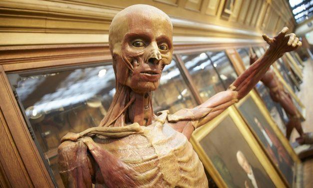 Fermeture du Musée d'Histoire de la Médecine jusqu'au 30/07